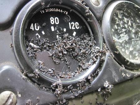il-6.jpg